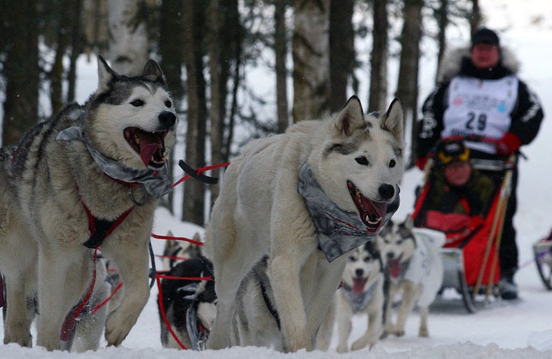 Every Day Is Special March 4 2012 The Iditarod Begins