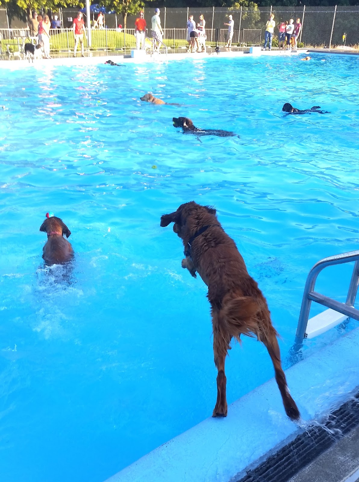 dog jumping in a pool
