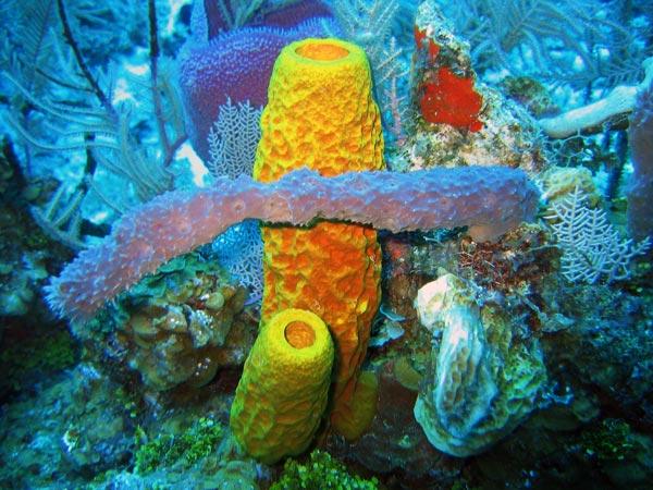 el moderno prometeo: Filo Porifera: poríferos.