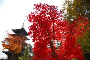 Japão, Pagóde, Sakura e Zion