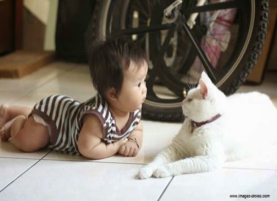 Bébé et chat blanc