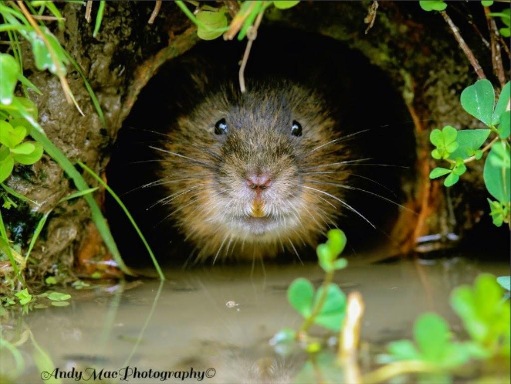 Animals And Their Habitats 39720 | SITWEB