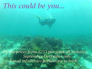 cheap diving at tracc semporna sabah