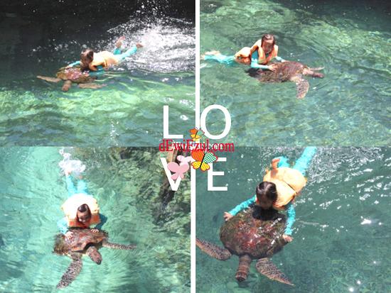 berenang dengan penyu,penangkaran penyu kura kura di sulsel