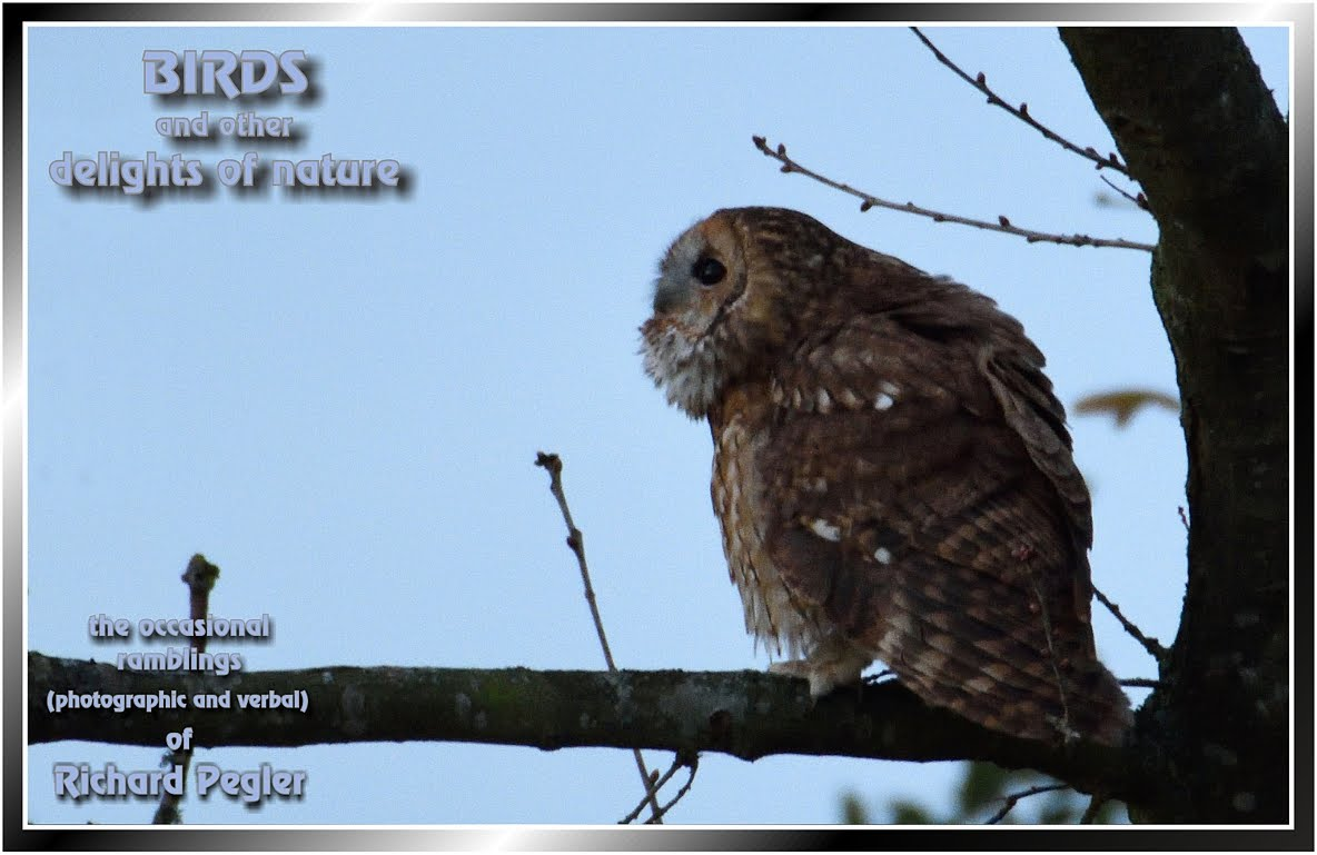 Pegler Birding