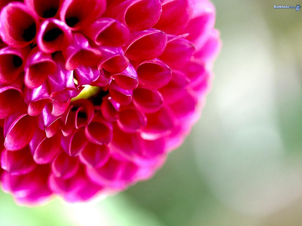 les plus beau fond ecran fleurs