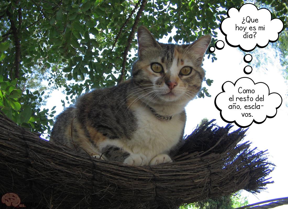 Año internacional del gato