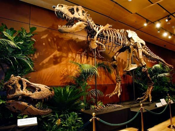 Estudo publicado na revista Science, diz que o Mundo está à beira de uma extinção em massa.