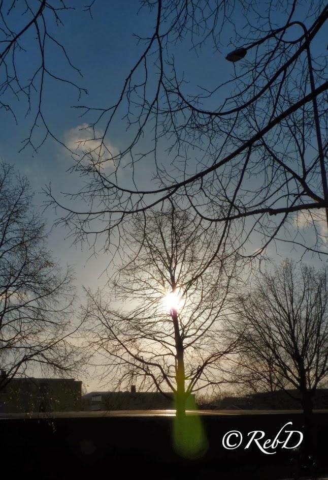 blå himmel och sol som silas genom trädgrenar foto: Reb Dutius