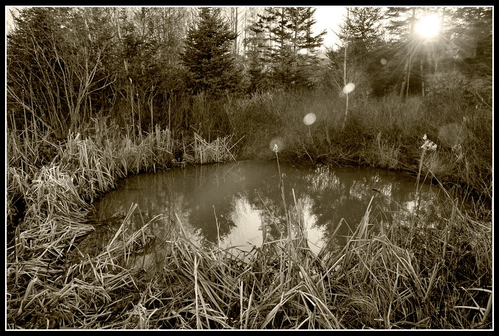 Nova Scotia; Water; Pond