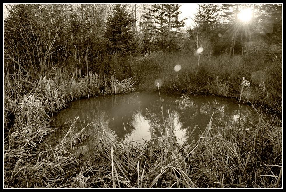Nova Scotia; Water; Pond