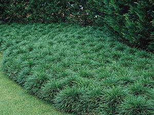 p r landscaping inc landscape plants l z. Black Bedroom Furniture Sets. Home Design Ideas