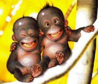 Imagen de monos bebés (Abrazo de monos)