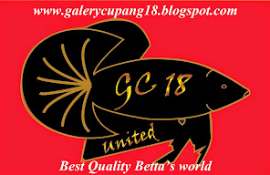 GALLERY CUPANG 18 UNITED