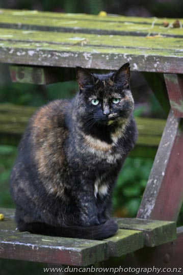 My World - cat on a barbecue table photograph