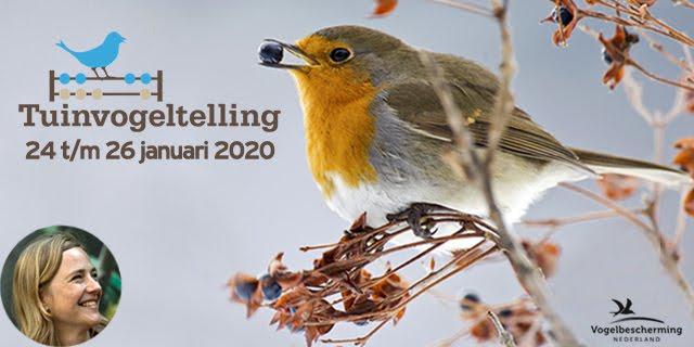 Tuinvogeltelling 2020