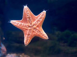 pink star (11)