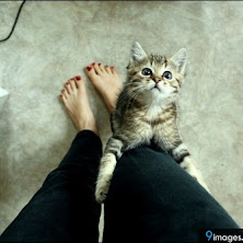 cute, stylish, cat