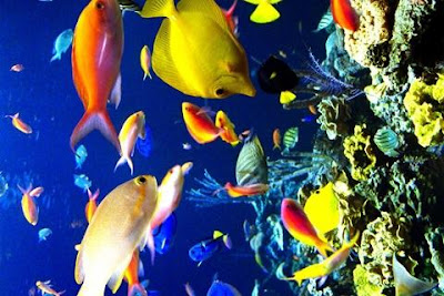 Underwater Wallpapers Android