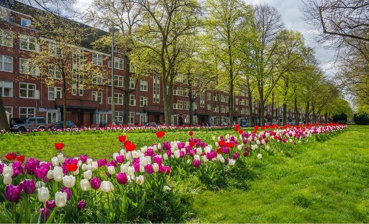 Festival tulipan Amsterdam