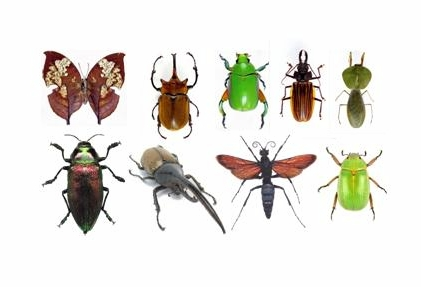 ¿Que Significa? Soñar con Insectos