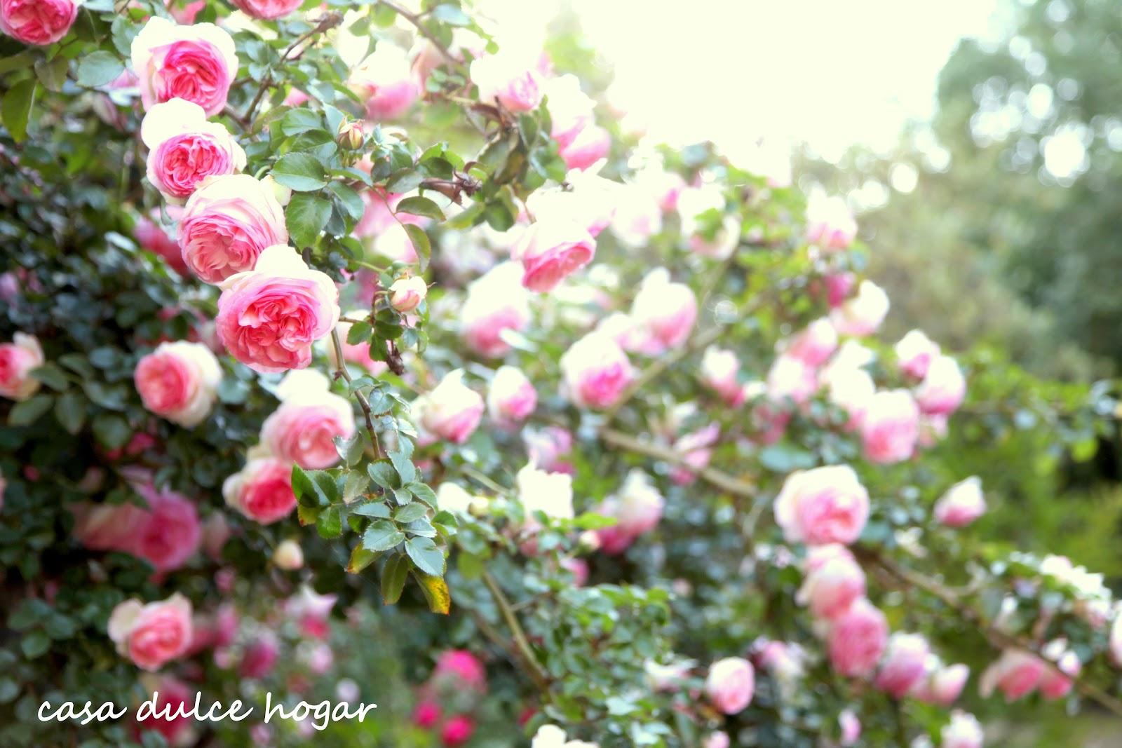 Casa dulce hogar pierre de ronsard roses and clouds - Casas en roses ...