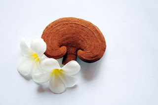 ử dụng nấm Linh Chi  giúp tăng cường sức khỏe, chống lão hóa, làn da khỏe đẹp mỗi ngày