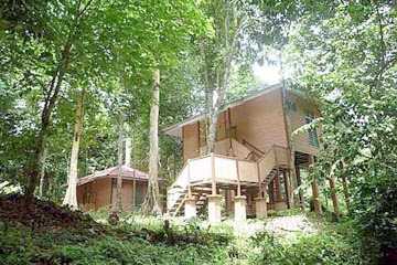 Hidden treasure: Lush greenery surrounds the chalets of Earth Lodge in Ulu Muda forest.
