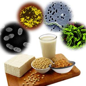 Alimentos probi ticos y prebi ticos realmente son necesarios el saber culinario - Alimentos con probioticos y prebioticos ...