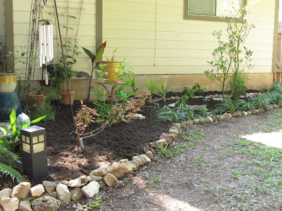 Divasofthedirt,mulched bay laurel bed
