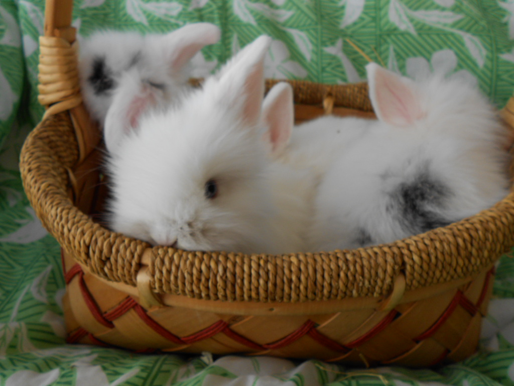 How to potty train an old rabbit pregnant