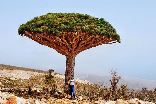 socotra+island+pulau+dajjal billyinfo5 Keanehan Pulau Socotra di Yemen, pulau Dimana DAJJAL Dirantai?