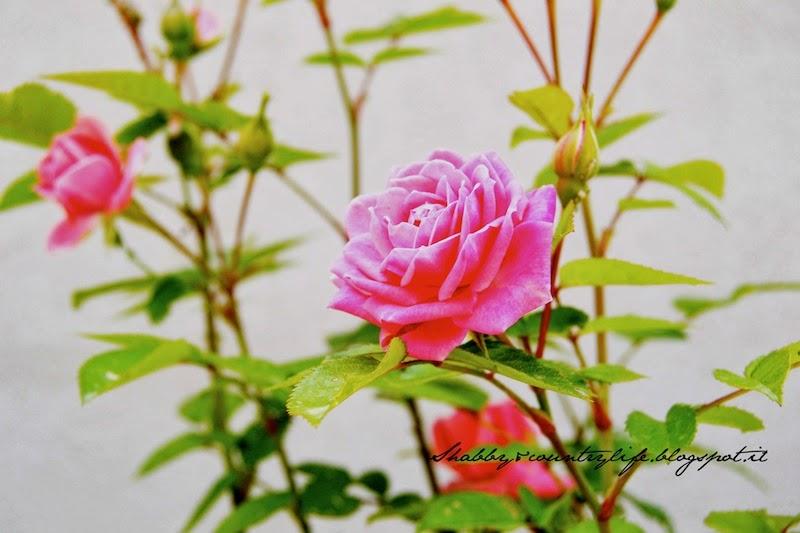 Primavera { Inusuali rimedi per le piante ai tempi delle nonne } - - shabby&countrylife.blogspot.it
