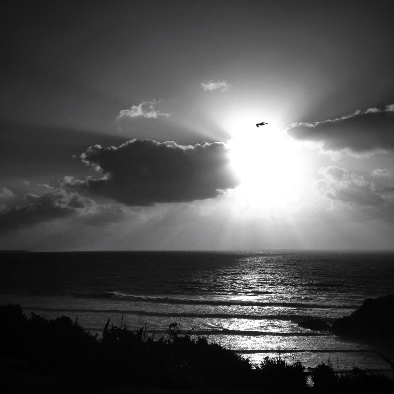 black and white gull sun rays
