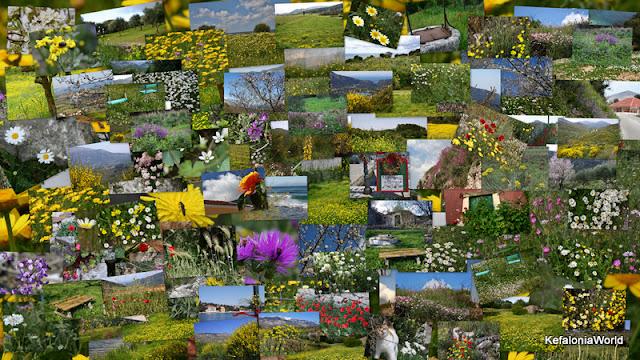 Waltz of the Flowers in Kefalonia, Greece