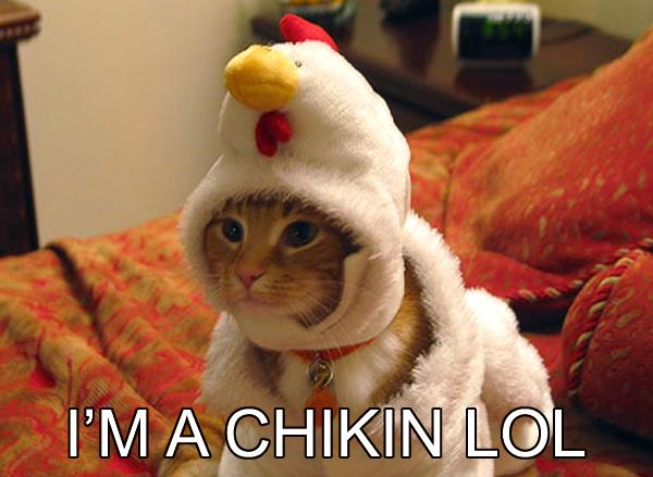 Funny+chicken+photos+image+pic+cat+chicken