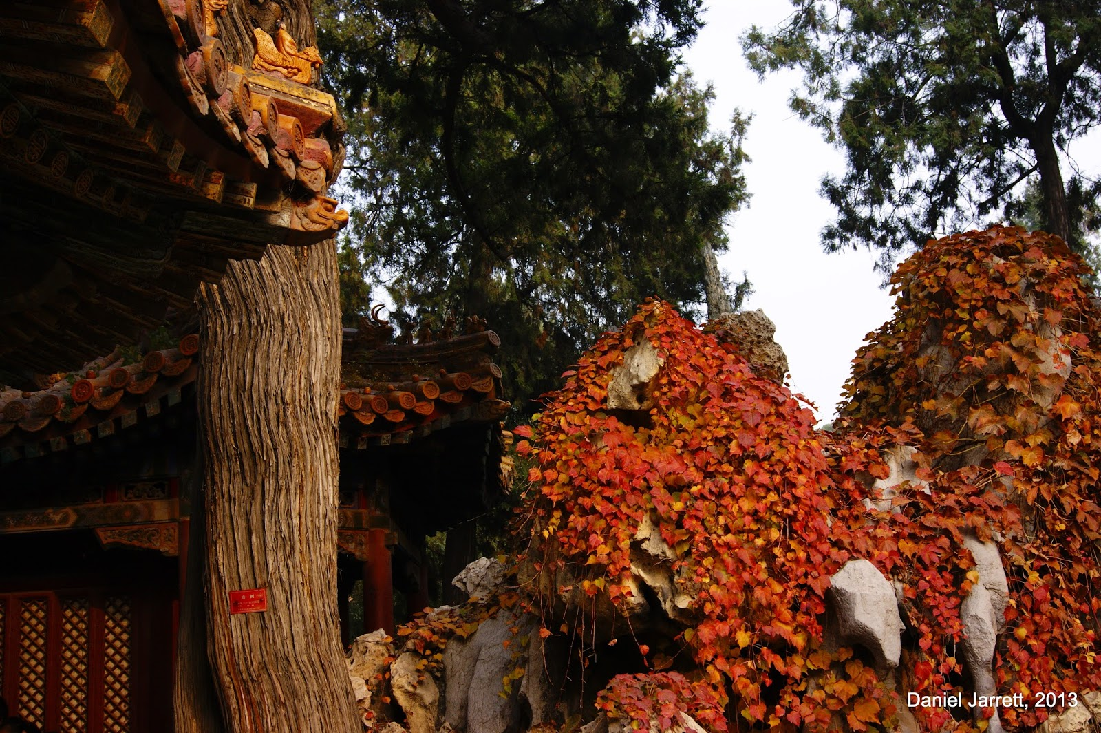 Forbidden City Autumn