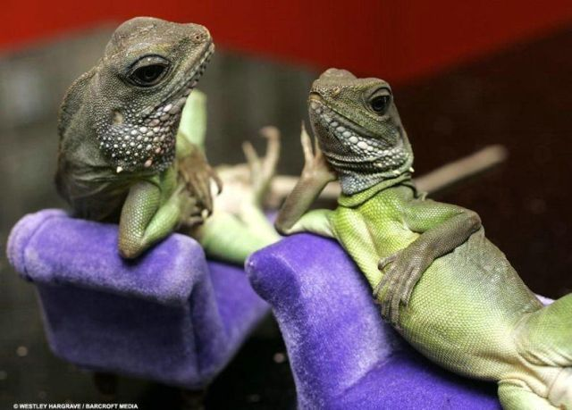 Funny Lizards Images Photos Funny And Cute Animals