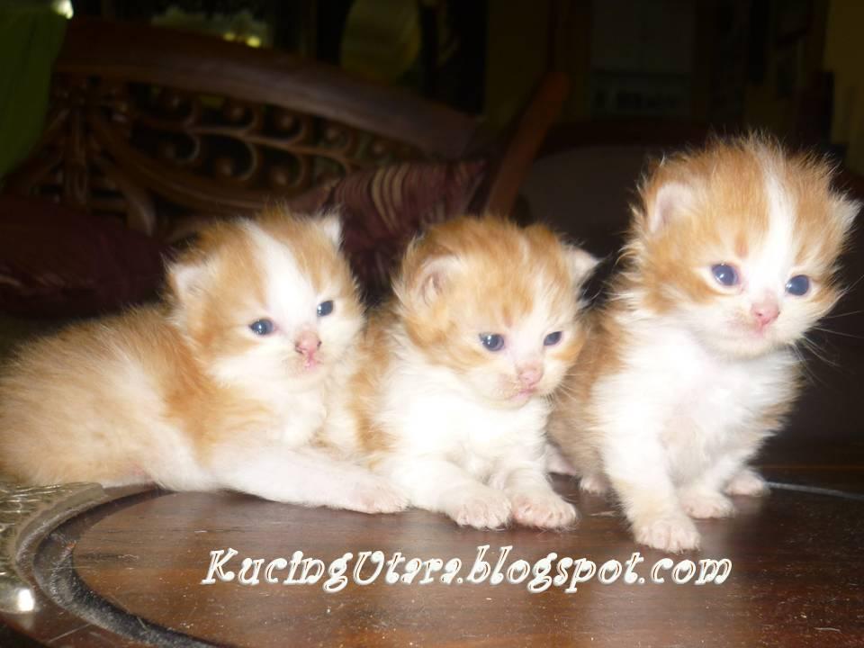 Kucing Rabies Daftar Penyakit Berbahaya Yang Menyerang