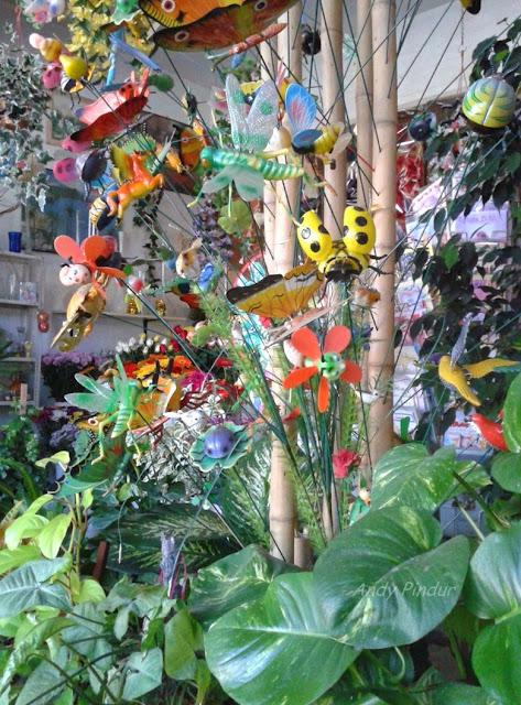 Imagenes De Flores Medicinales - Plantas medicinales en México Me lo dijo Lola
