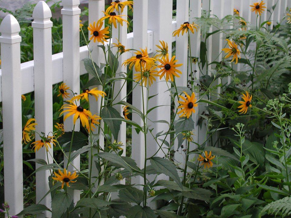 Native Plant Nursery Ohio