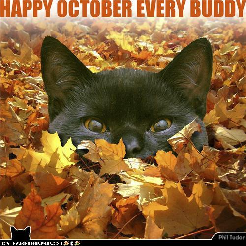 Topic des chats - Page 33 Happy+october