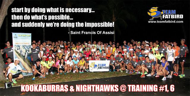 Marathon Training: Flocks Kookaburra & NightHawk