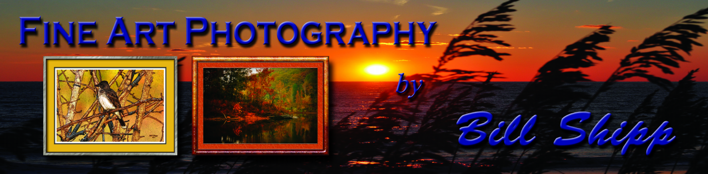 Fine Art Photography by Bill Shipp Banner | Banners.com