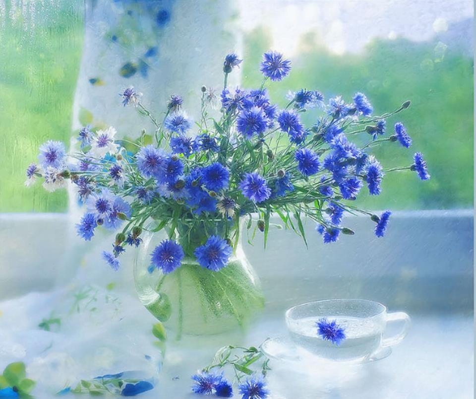 Fotografias de jarrones de cristal fotografias y fotos - Fotos jarrones con flores ...