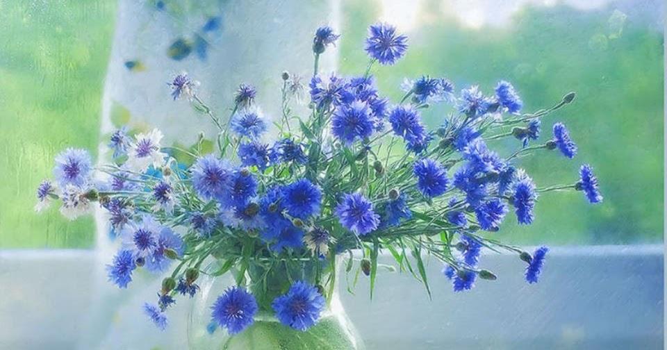 Fotografias de jarrones de cristal fotografias y fotos - Jarrones de cristal con flores ...