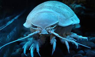 اكثر مخلوقات عالم البحار رعباً 7.jpg