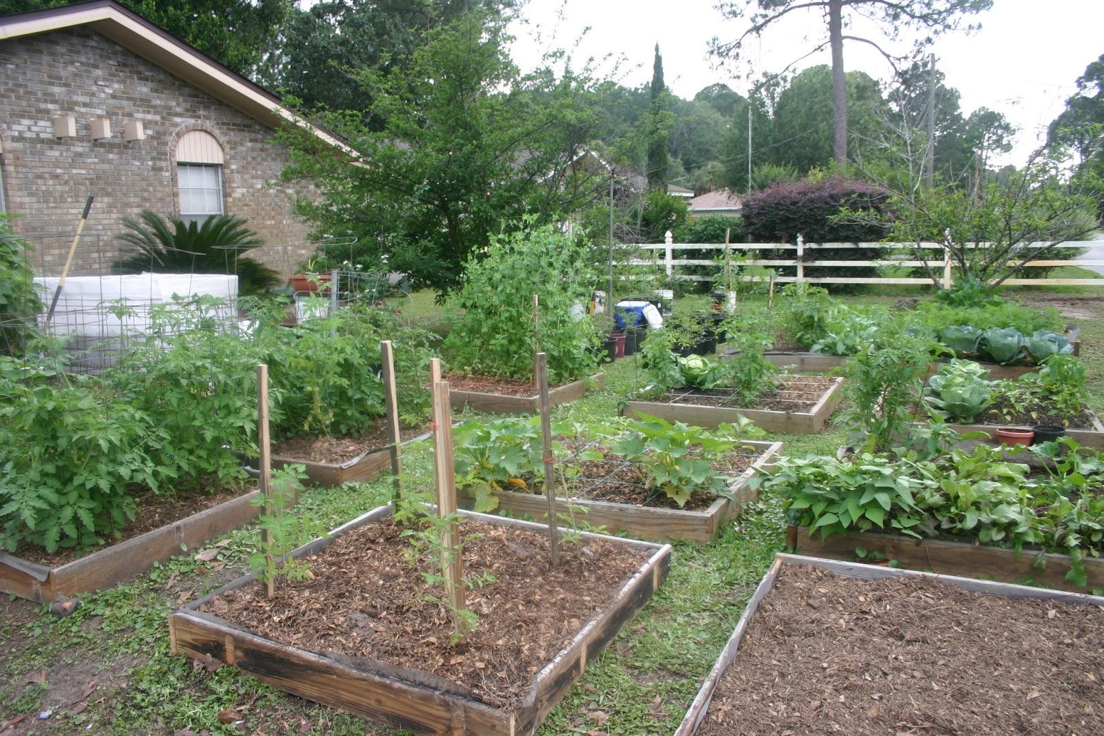 Homestead Life Square Foot Gardening