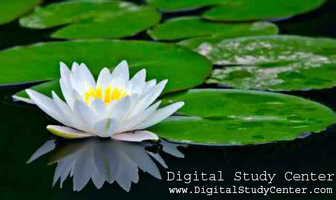 Some Common Flowers Of Bangladesh Digital Study Center An