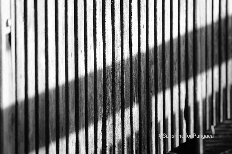 Black and white photography: fence